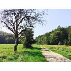 KisPolski trail (9km) Távok és nevezés